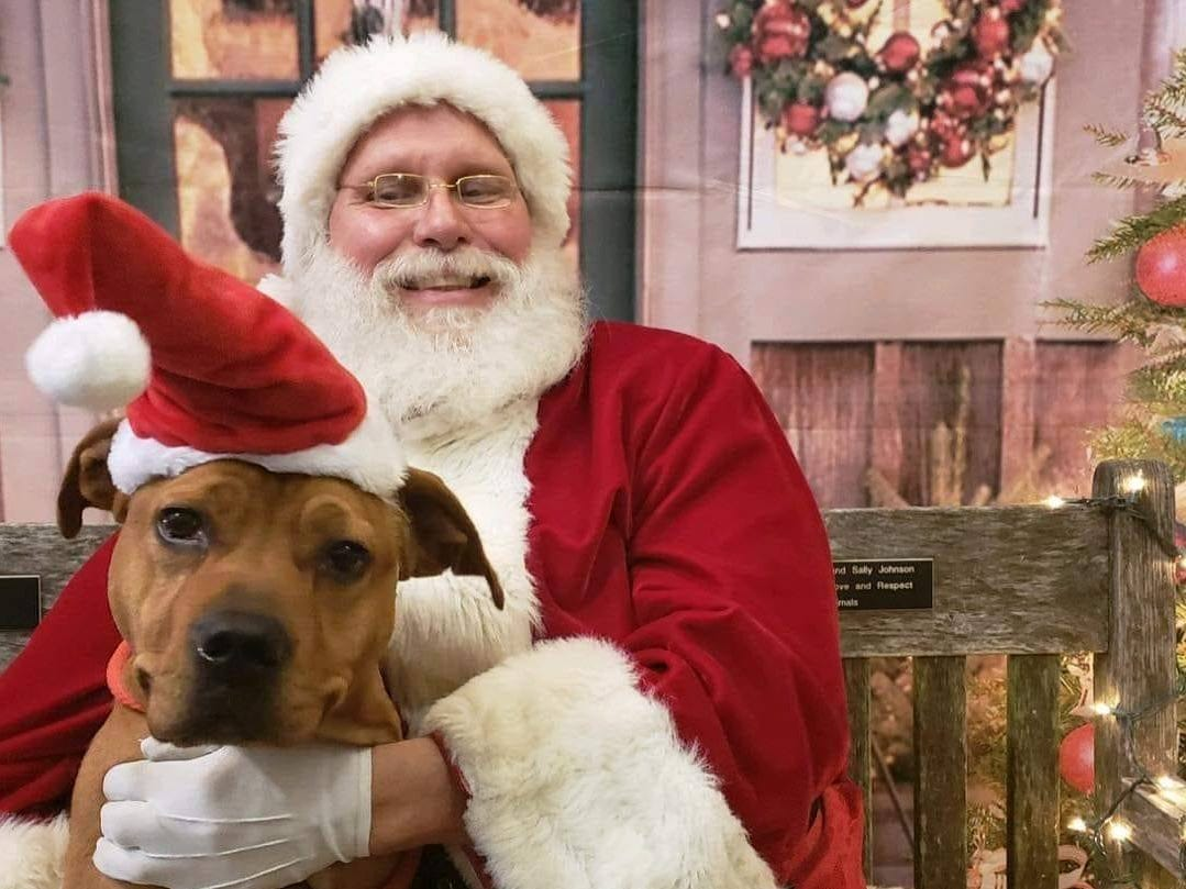 Tanner, a young pit bull terrier mix, poses with Santa at the York County SPCA. Tanner is available for adoption.