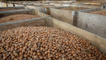 The hazelnut industry is looking to bring their crop to a hungry domestic market with a new state-of-the-art processing facility in Donald, Oregon.