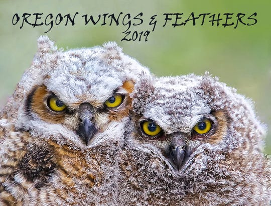 The 2019 Oregon Wings and Feather Calendar are now available.