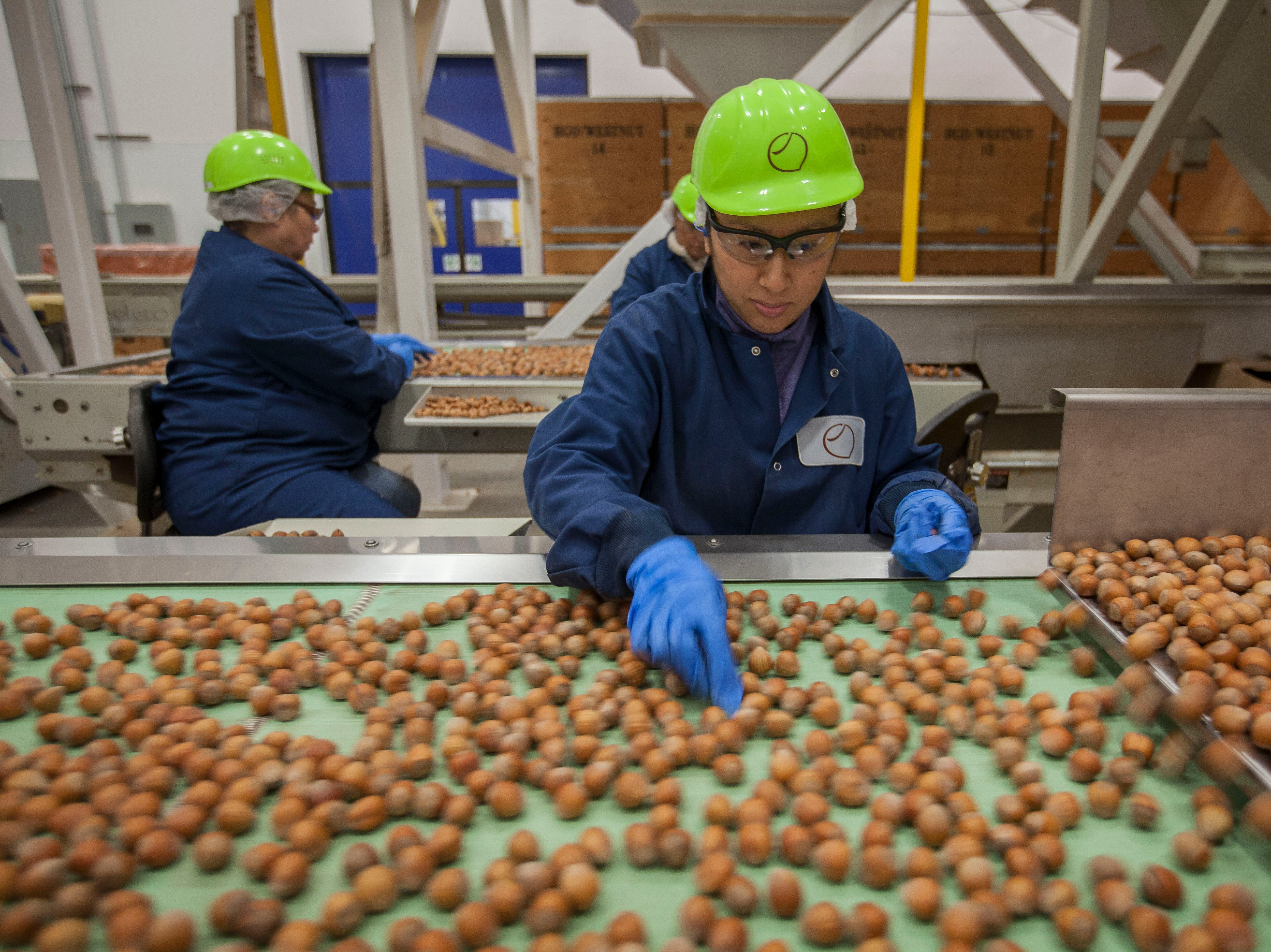 A look at the Hazelnut Growers of Oregon state-of-the-art processing plant
