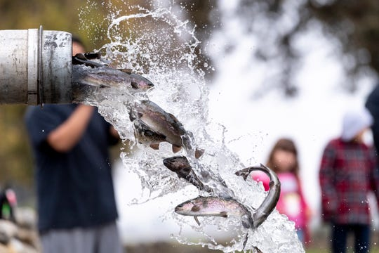 500 pounds of rainbow trout were released into the pond at Mooney Grove Park on Tuesday, December 11, 2018. They range in size from about 3/4 pound to 1 1/2 pounds. The pond will be restocked every two weeks until March.