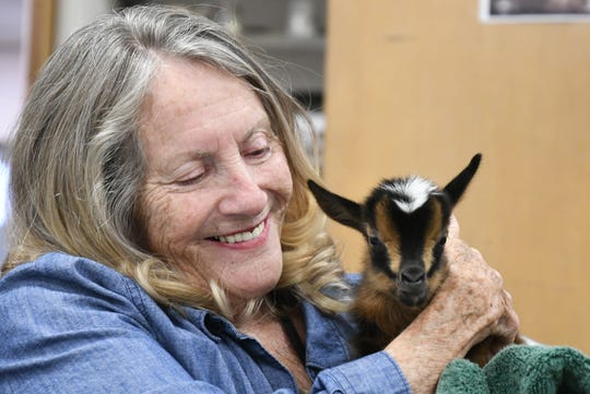 Pam Williams holds a baby goat at the Visalia Senior Center.