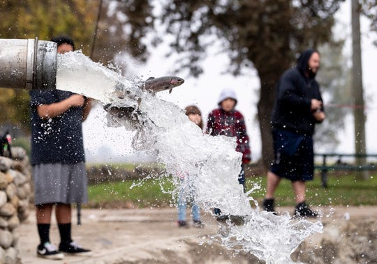 Johnny See, left, Shyleigh Hughes, 6, Harley Hughes, 8, and Nathen Hughes watch as 500 pounds of rainbow trout were released into the pond at Mooney Grove Park on Tuesday, December 11, 2018. They range in size from about 3/4 pound to 1 1/2 pounds. The pond will be restocked every two weeks until March.