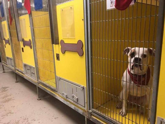A dog waiting to be adopted at Faithful Friends Animal Shelter in December.