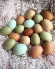 Almost every one of Danielle Raad's 23 chickens are of a different breed, and they produce eggs in a wide range of colors and sizes.