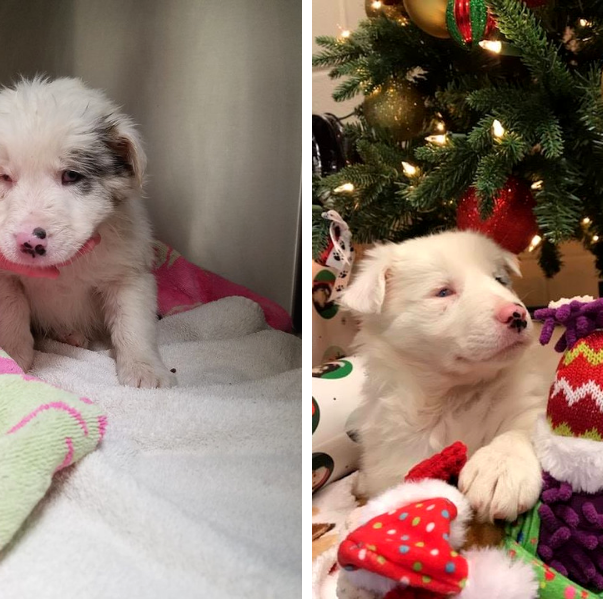 Two good Samaritans rescue puppy found in trash bag dumped in freezing Kentucky creek
