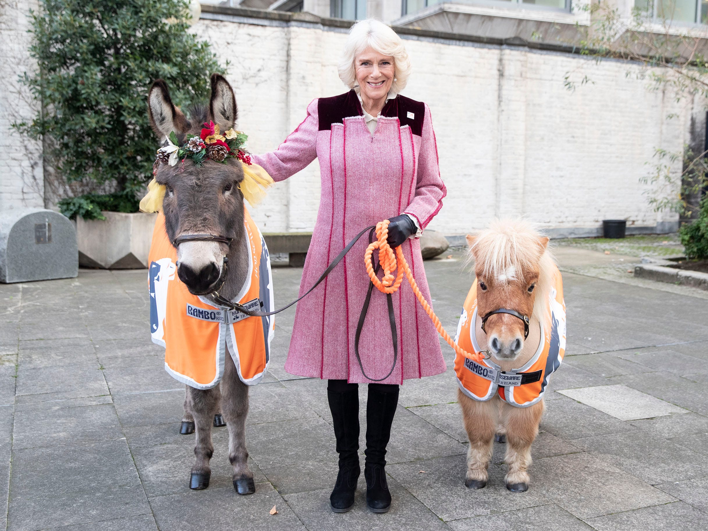Camilla, Duchess of Cornwall, meets Ollie the Donkey and Harry the Mini Shetland Pony at a charity event at the Guards Chapel on Dec. 12, 2018 in London. The duchess attended a carol service for the animal welfare charity Brooke Action for Working Horses and Donkeys at the Guards chapel in Westminster.