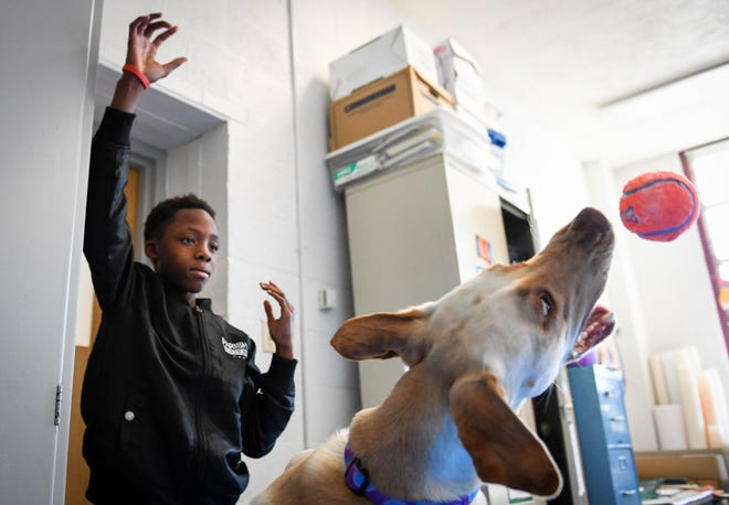 Harper Elementary School fifth grader Javarious Graham, 11 years-old, plays catch with Chloe, a 2-year-old champagne Labrador retriever Wednesday. The dog is the school's official licensed therapy pup and helps students with cognitive, emotional, social and environmental issues, December 12, 2018.