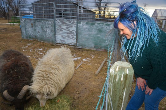 Jennifer Skinner of Sun River makes custom dreadlocks hair extensions with wool from Icelandic, East Friesian and an Icelandic-East Friesian cross of  sheep.