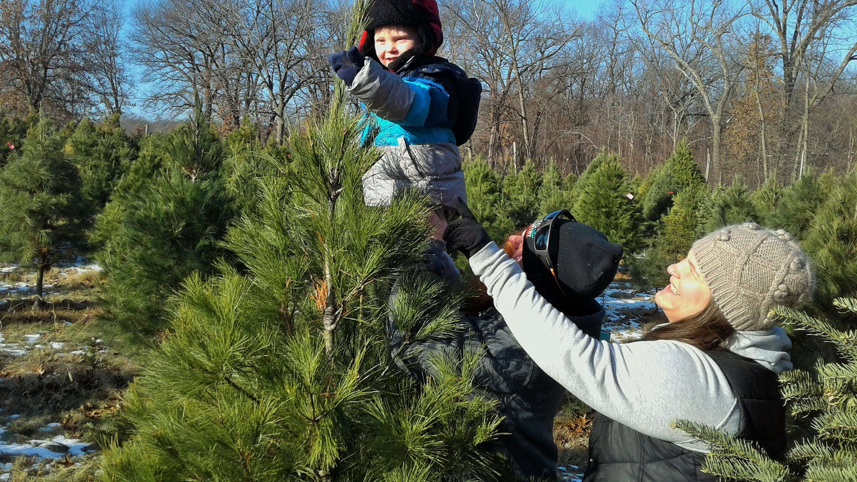 Local Farms Rapidly Selling Out Of Fresh Cut Christmas Trees