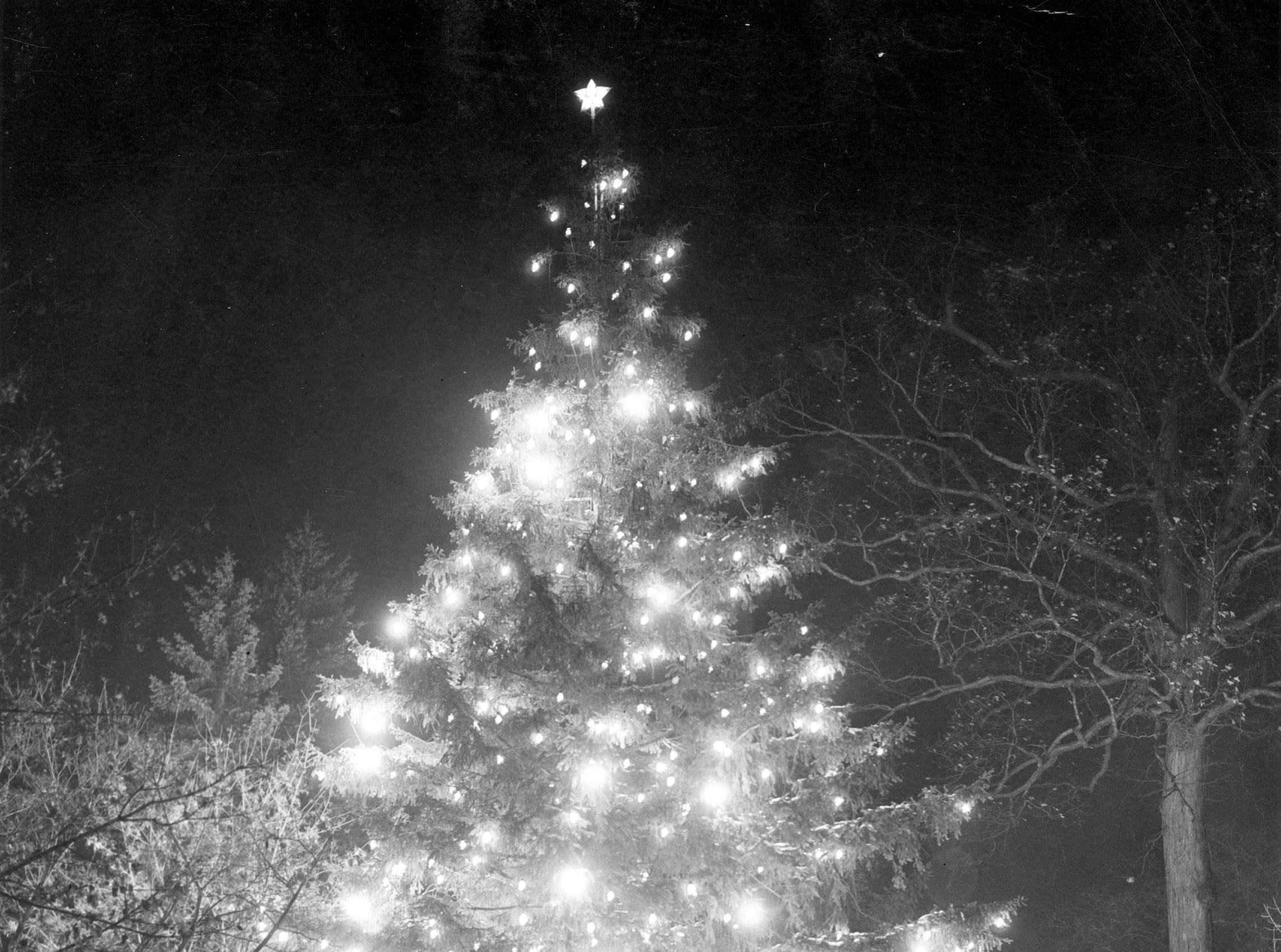 "An MSU campus tree is decorated and lit for Christmas. The back reads, ""Caption - Christmas tree, in front of Union Building,"" date unknown."