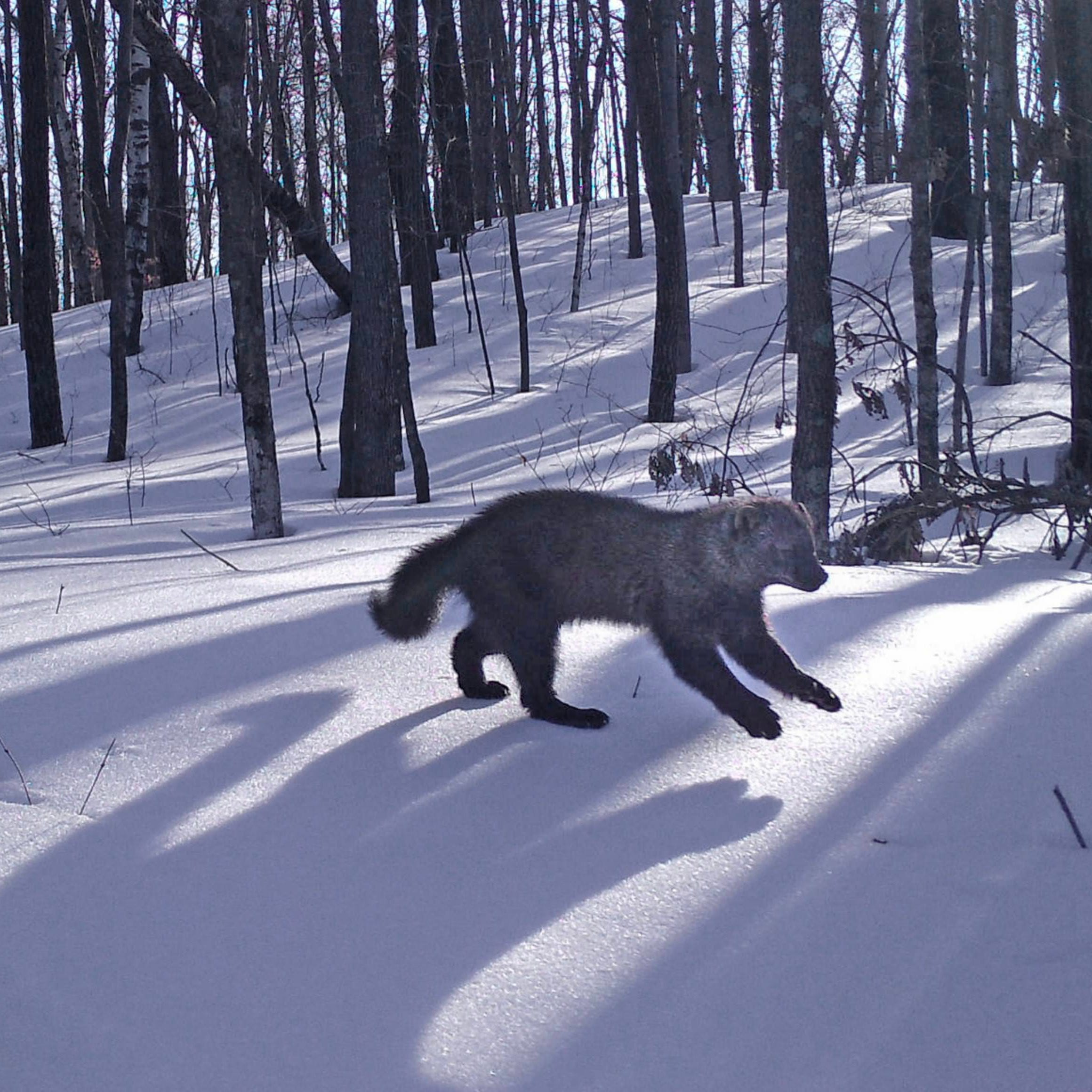 Photos: Wisconsin wildlife captured by trail cams