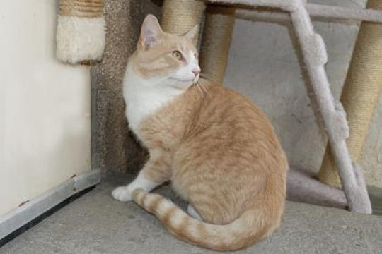 Aslan is a very chill 2 year old male. He weighs about 8 pounds and he loves to get attention.