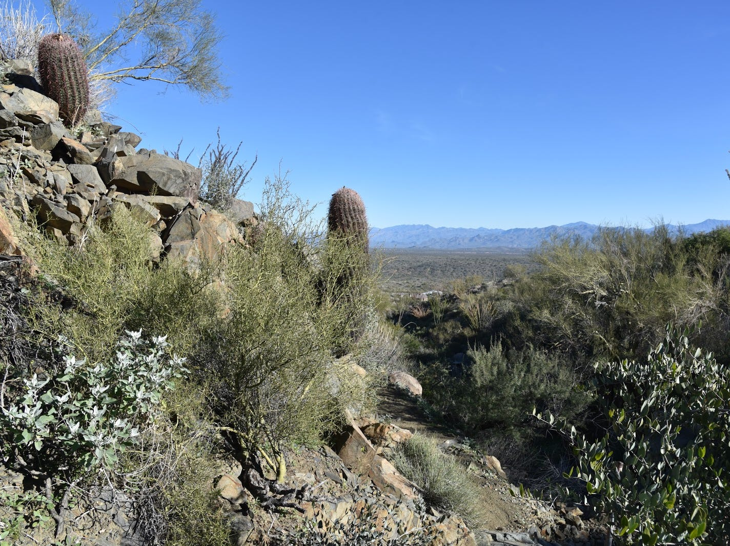 The Sonoran Trail dips and climbs through rugged foothills at Fountain Hills McDowell Mountain Preserve.