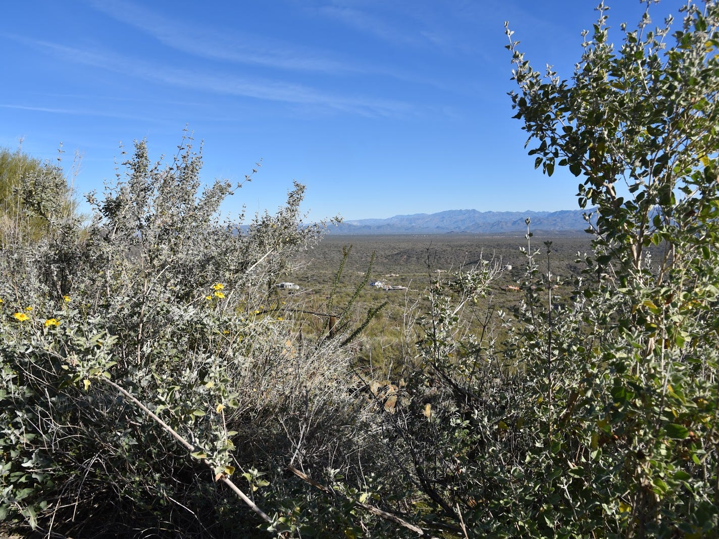 Desert lavender shrubs frame views of Tonto National Forest mountains.