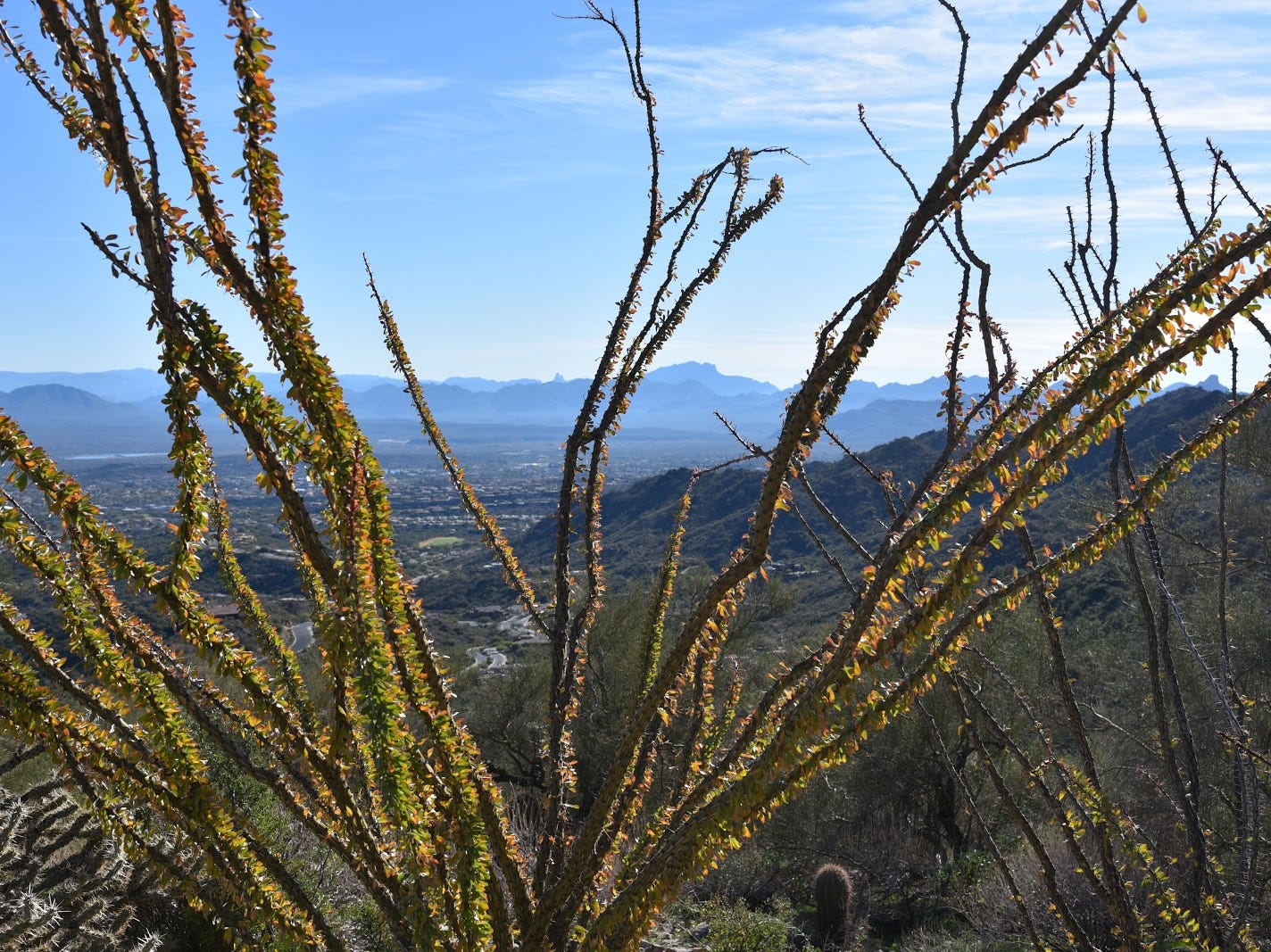 Ocotillo frames Superstition Wilderness peaks views from the Fountain Hills McDowell Mountain Preserve.