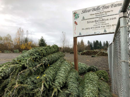 In this November 2018 photo, Christmas trees sit in a dirt lot at Silver Bells Tree Farm in Silverton, Ore., before being loaded onto a semi-truck headed for a Los Angeles tree lot. Christmas tree farmers nationwide are paying a fee to the Christmas Tree Promotion Board for each tree harvested to fund a social media ad campaign aimed at convincing young families to buy real trees instead of artificial ones.