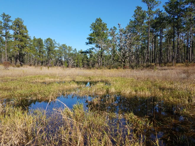Sierra Club is organizing a hike on Wednesday to Munson HIlls.