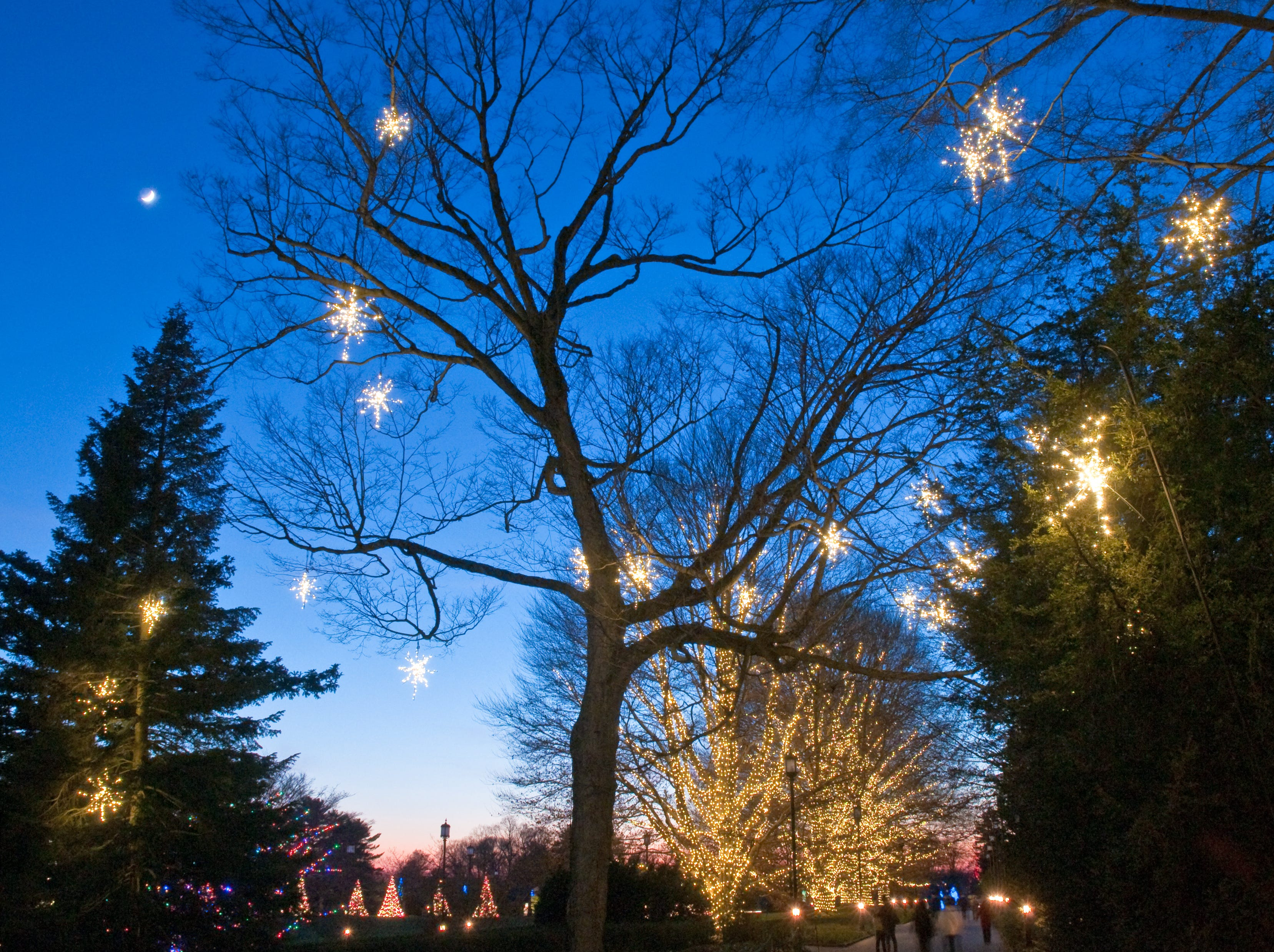 More than 500,000 lights spread over 150 trees light up Longwood Gardens during its 2018 Christmas exhibit.
