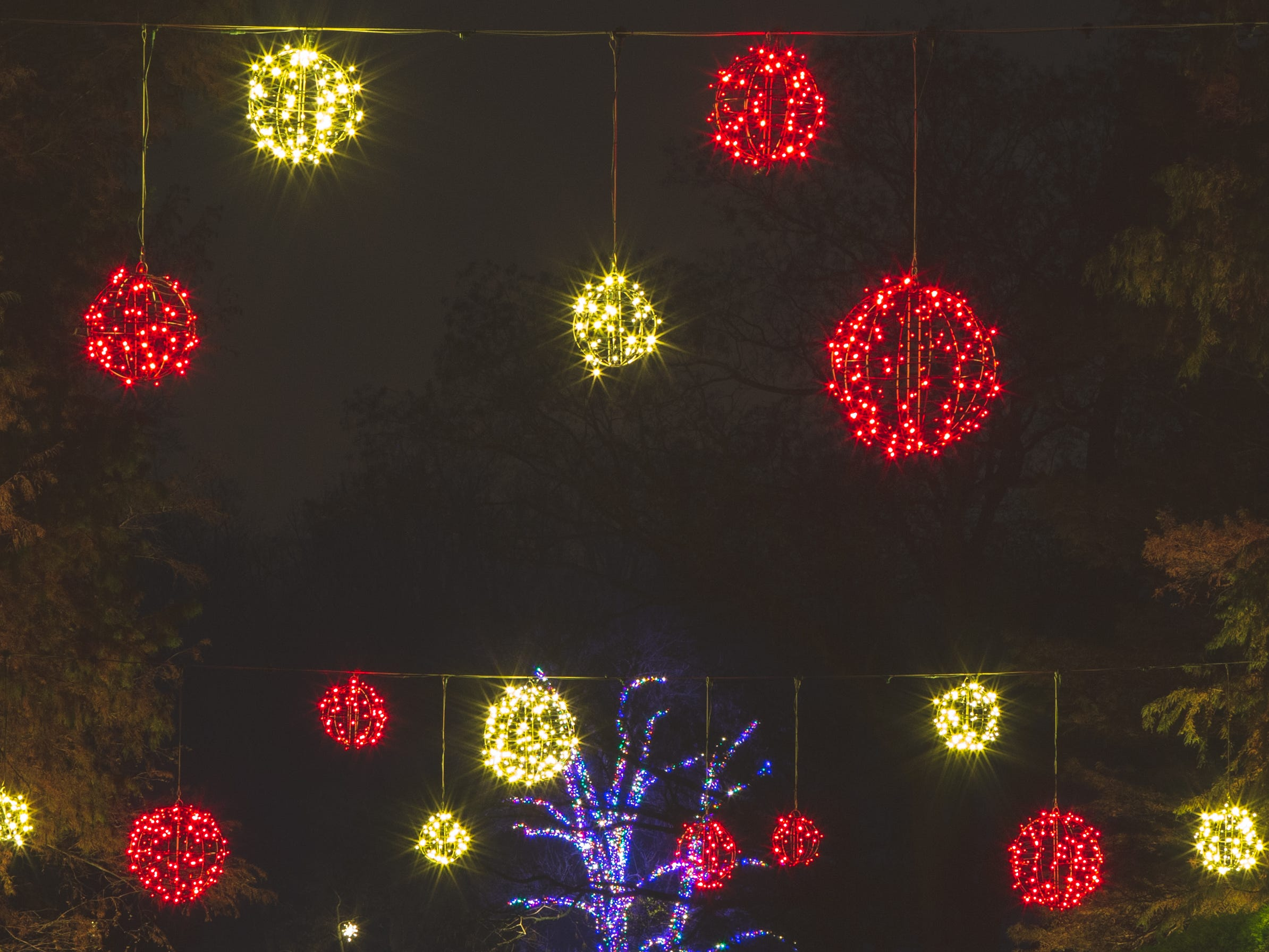 One hundred red and white orbs float above the flower garden walk during A Longwood Christmas in 2018.
