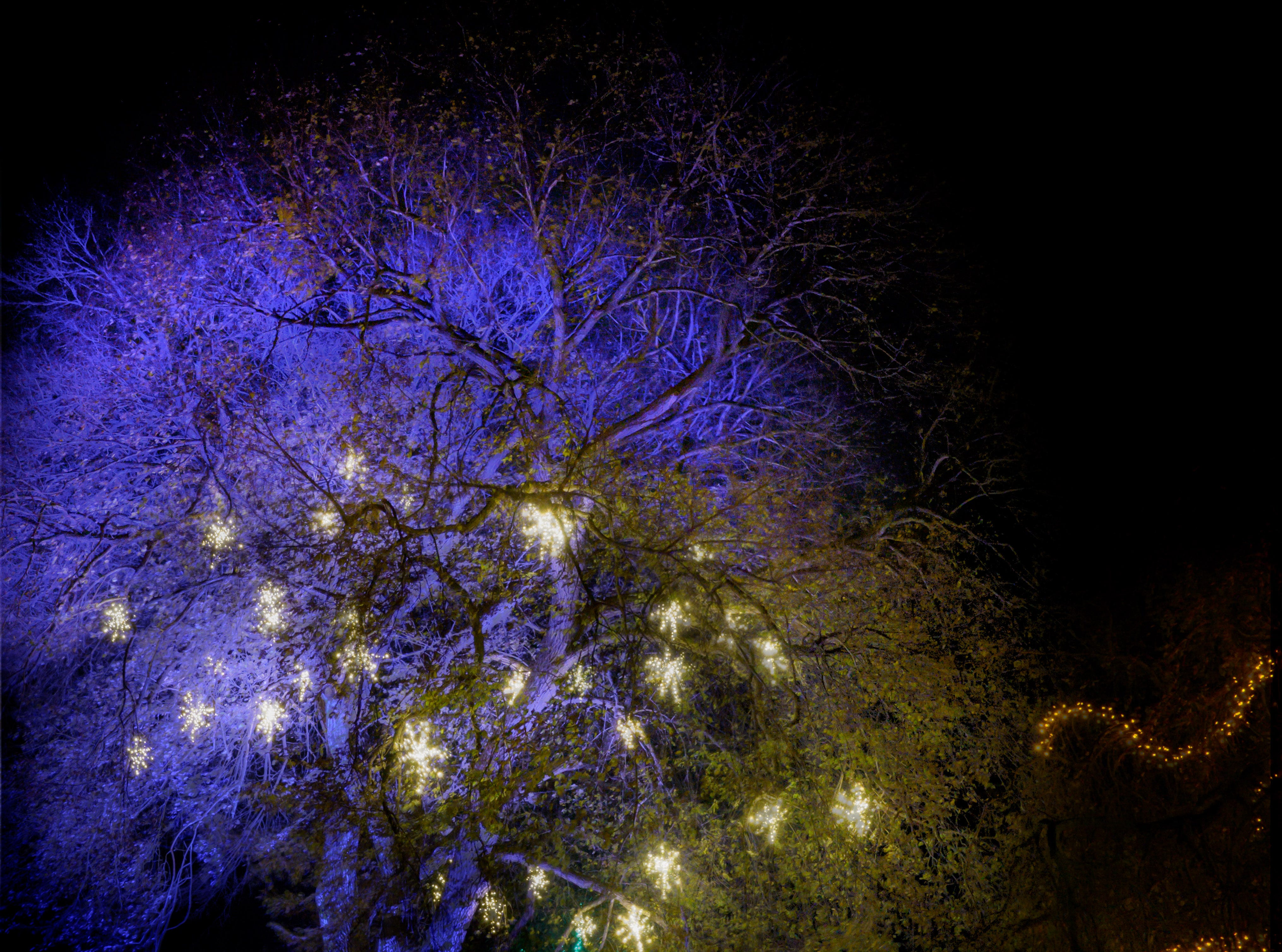 More than 500,000 lights on 150 trees add glitter to the grounds during A Longwood Christmas in 2018.