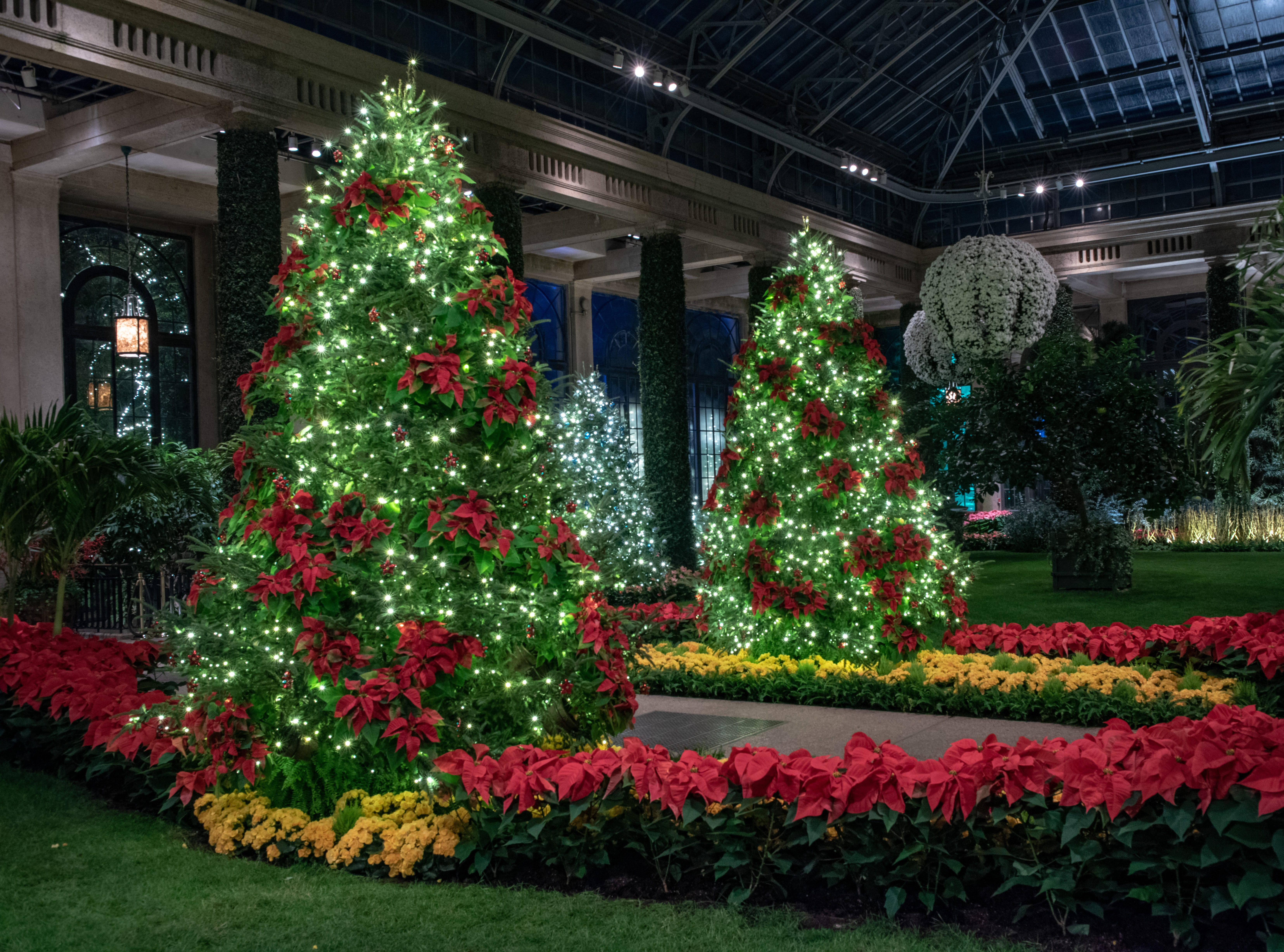Trees studded with poinsettias welcome guests to the conservatory during A Longwood Christmas.