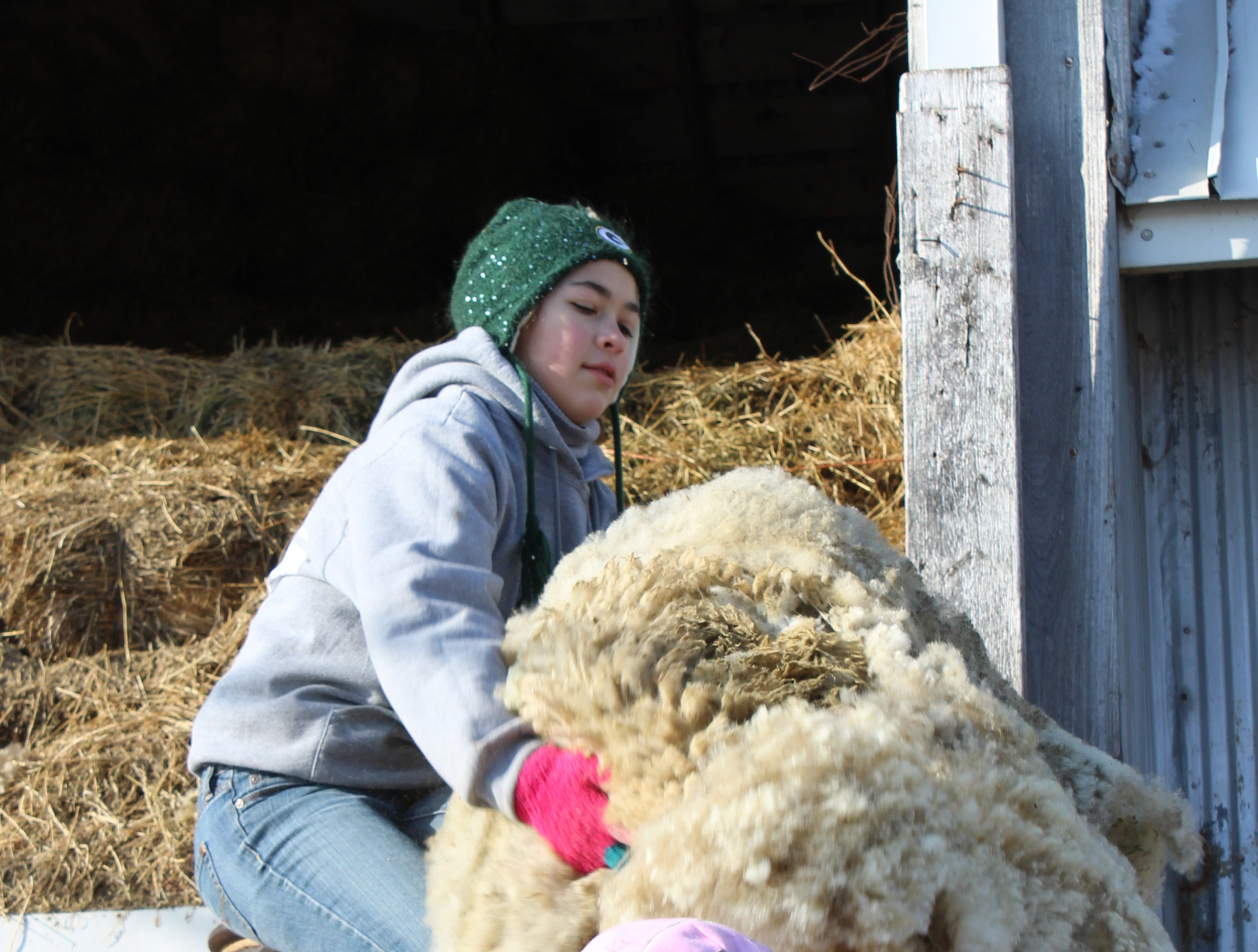 Hailey Boelk (left) grabs a fleece from her cousin, Marissa Kottke, to be placed into a large bulap bag that holds 125-150 lbs of wool.