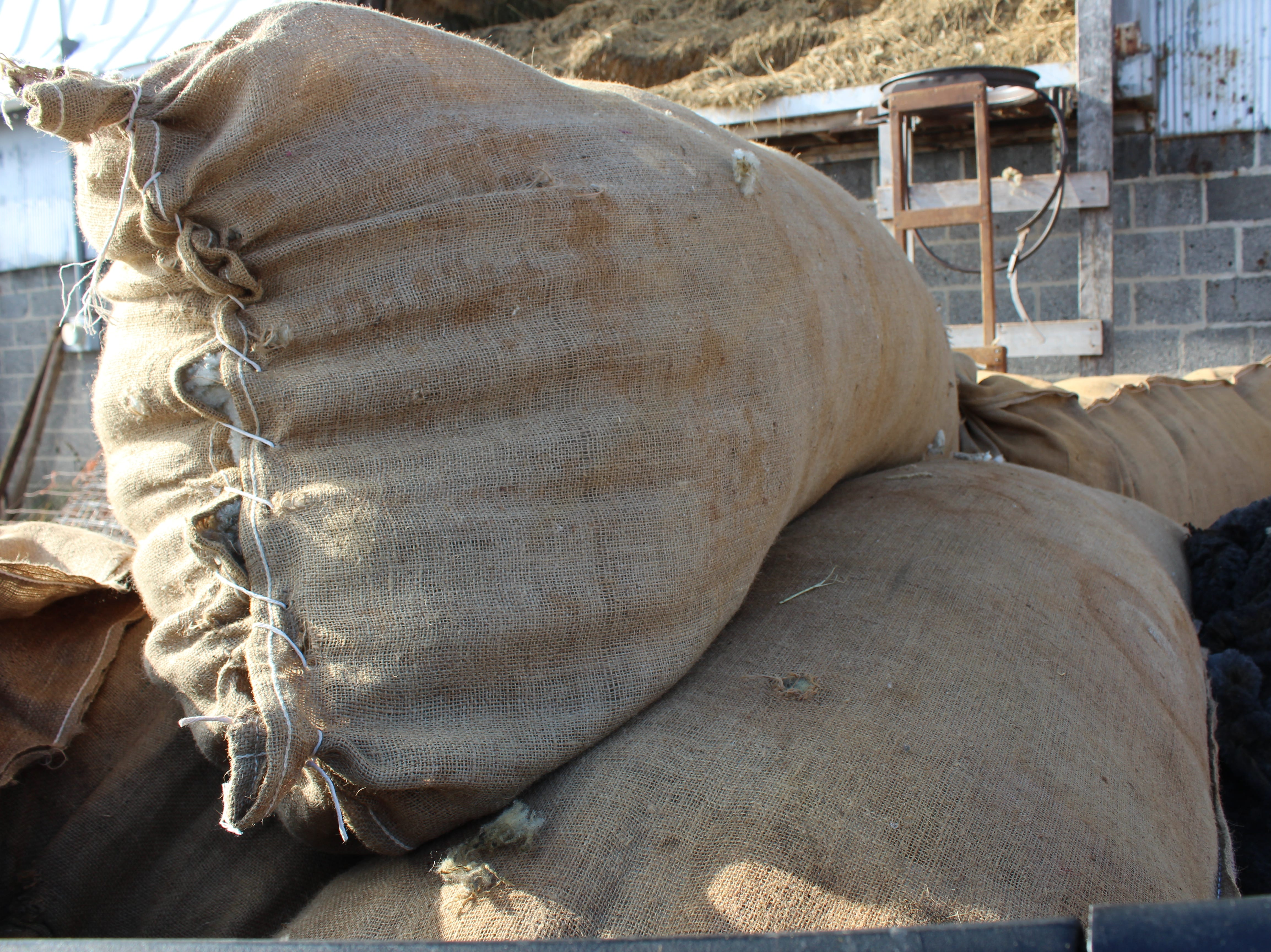 Four large bags of farm flock wool are headed to a buyer in Illinois to be  used in the carpet industry.