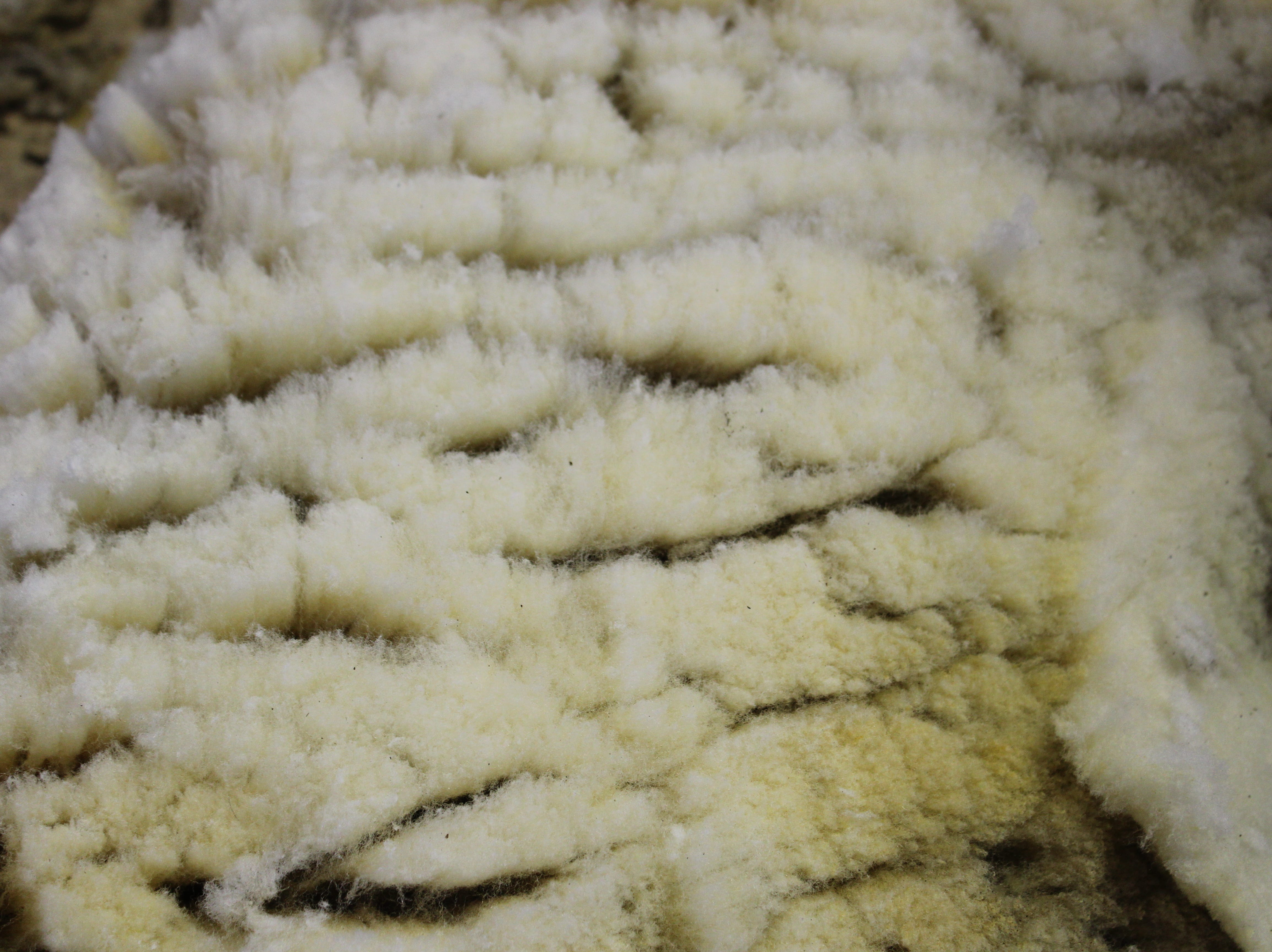 Coarse, farm flock fleece from the Kottke's meat breed sheep will be sold for use in the carpet industry.