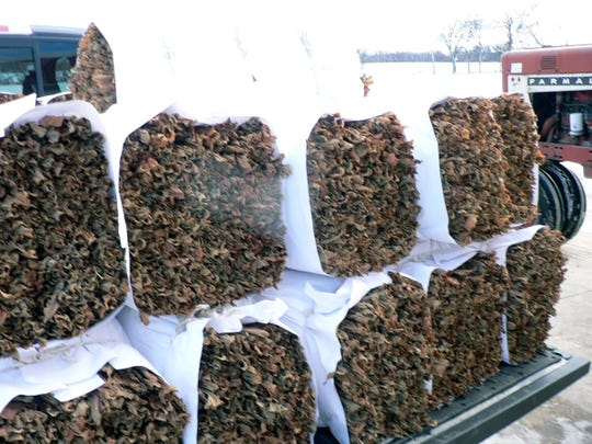 Bundles of tobacco ready to be delivered to the warehouse.