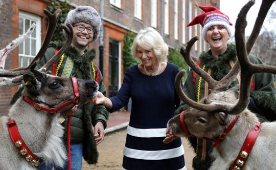 Duchess Camilla of Cornwall meets reindeer Dancer, left, and Blitzen, right, with their handlers Karen and Jason Perrins in the gardens at Clarence House in London, Dec. 6, 2018.