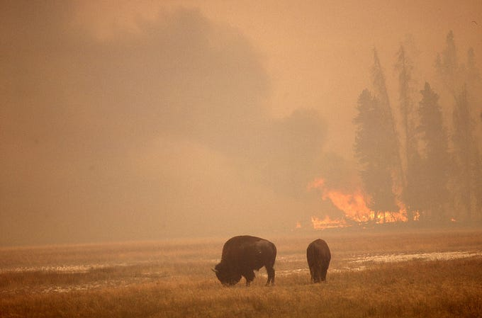 The landmark National Park Service wildfire was the 1988 Yellowstone fire. About a third of park burned.
