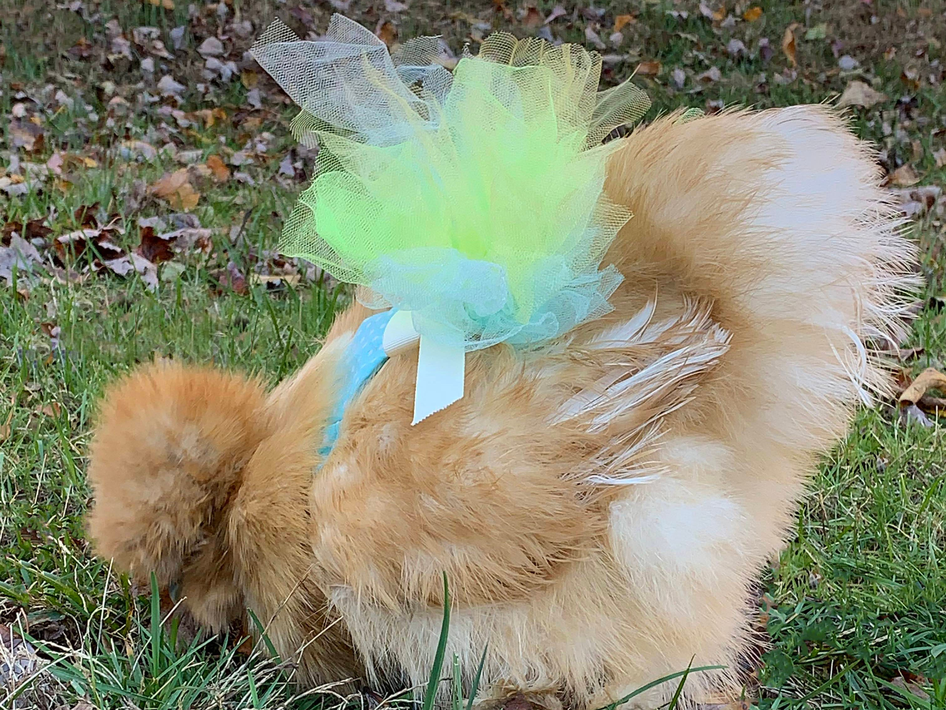 Among new products at Connecticut-based My Pet Chicken this year are tutus.