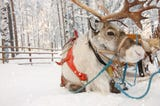 Reindeer are magical. Here's where you can catch a glimpse of these majestic creatures.