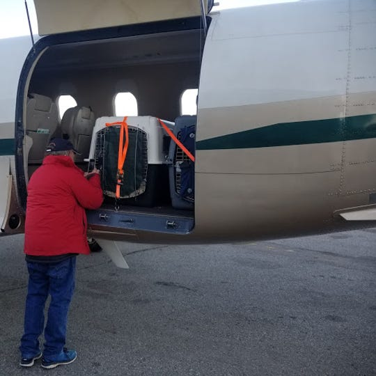 Mexican gray wolf Ryder was flown to New Mexico by the nonprofit LightHawk Conservation Flying.