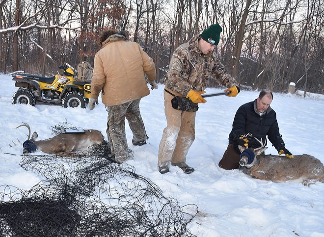 These two  bucks, which were caught and tagged by DNR biologists in February 2018 in Iowa County west of Madison, both tested positive for chronic wasting disease. Of 1,300 hunter-killed deer tested for CWD this fall in Iowa County, 25 percent carried the always-fatal disease.