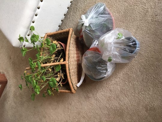 Bundling your plants in a plastic bag makes for a functional and cheap terrarium.