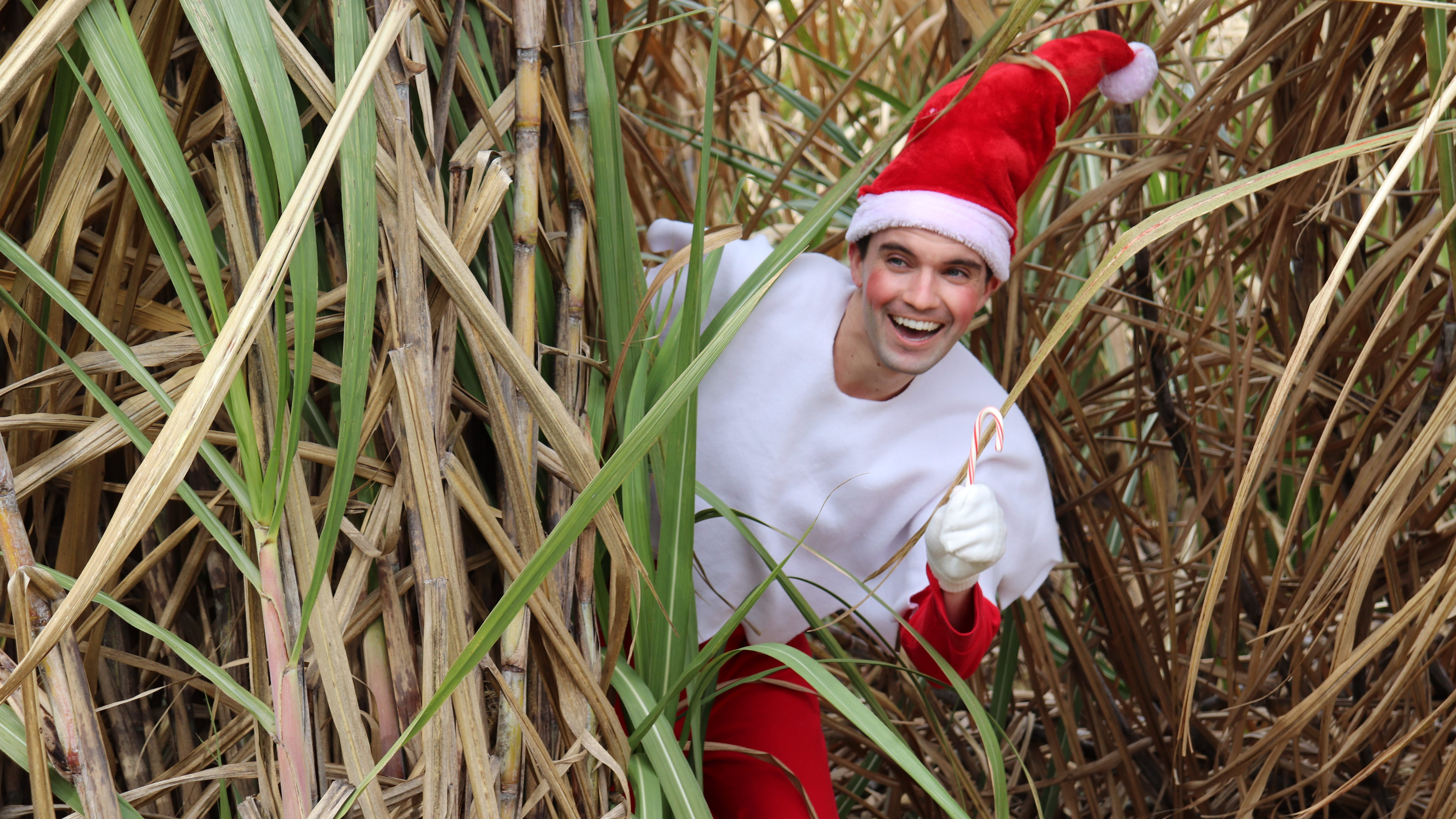 Louisiana State University's College of Agriculture introduces its Elf on the Shelf, Tabasceaux. His favorite Louisiana is crop is sugar cane, of course.