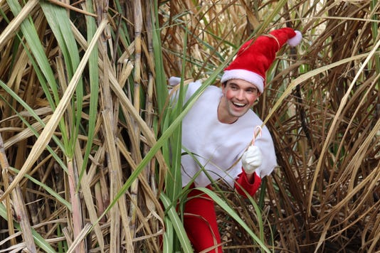 Lsu Ag Elf In Sugar Cane