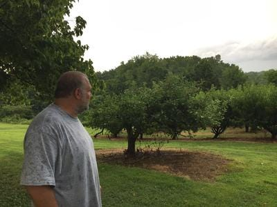 Breeden's Orchard co-owner Andrew Dorfman looks at part of the property prior to opening in 2018.