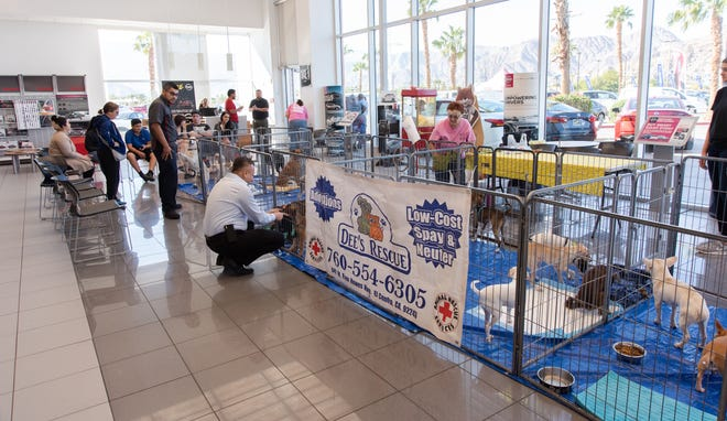 SNIP recently teamed up with Dee's Rescue at the TORRE Nissan dealership to find forever homes for our furry friends.