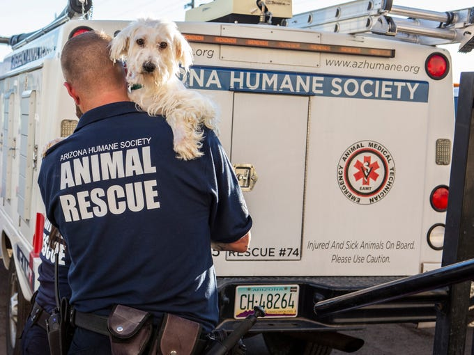 Adoptable pets were moved from the Arizona Humane Society Sunnyslope campus until the generators are back up and running.