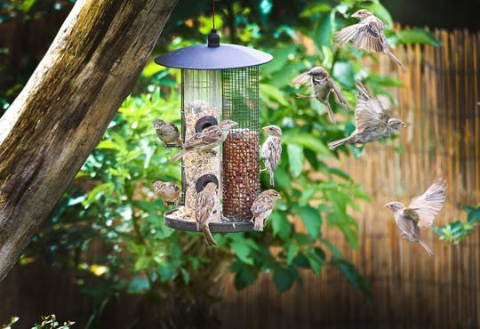 A bird feeder can provide entertainment and an activity that families can share.