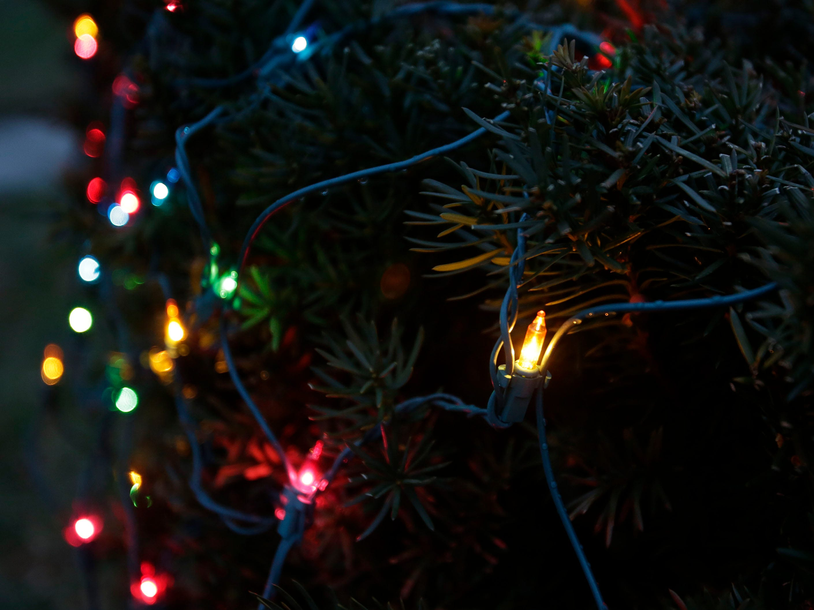 Lights on a bush on North 23rd Street, Wednesday, December 12, 2018, in Sheboygan, Wis.