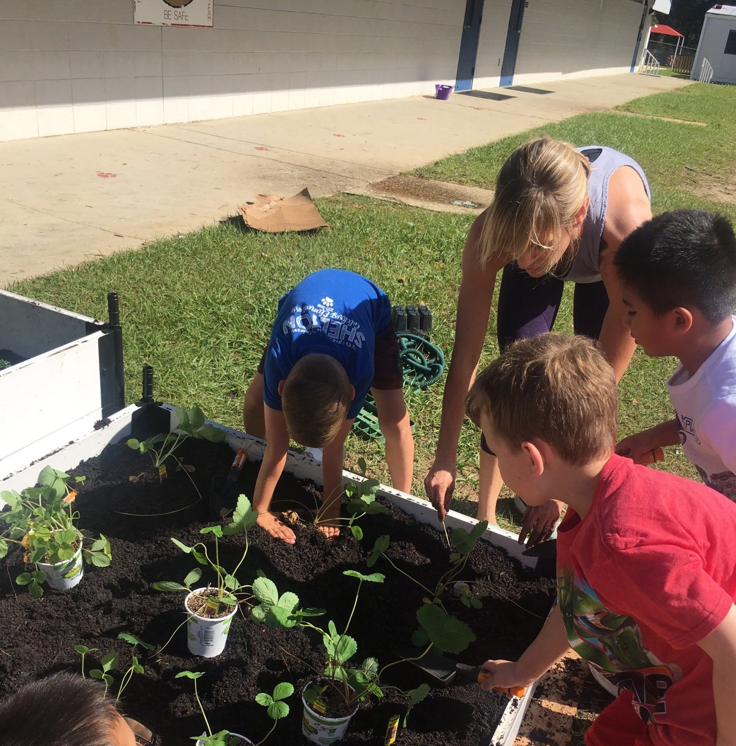 From a turnip seed: Farm to school grant connects kids to veggies