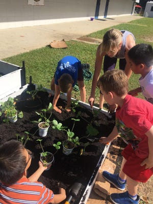 First-grade students at Gilchrist Elementary plant strawberries in their new garden beds.