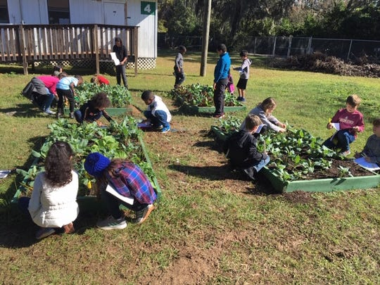 Third-grade students at Kate Sullivan Elementary measure their plants' progress and label each part.