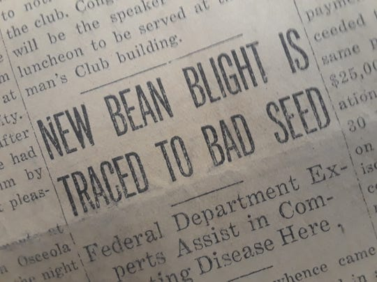 Diseased seeds cause problems for string bean growers in 1928.