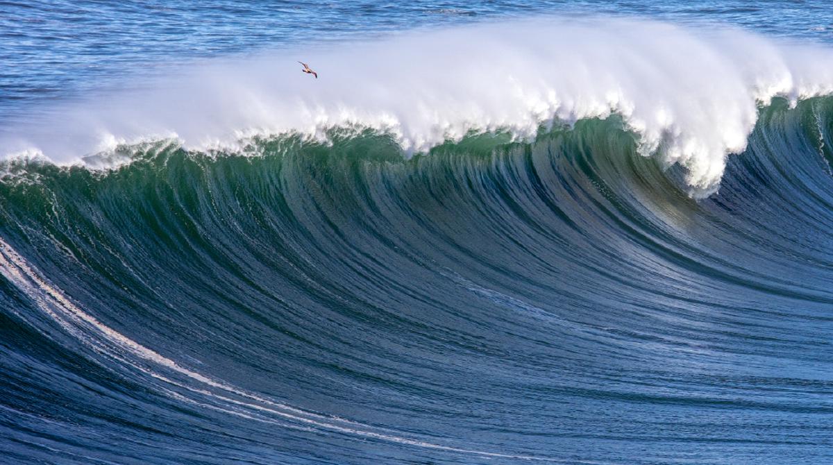 Mavericks surf waves are deadly
