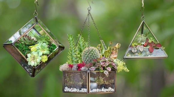 Create a stunning little garden for your recipient.